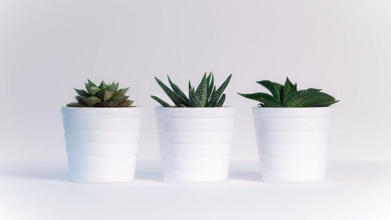 Feng Shui Plants - WOFS com